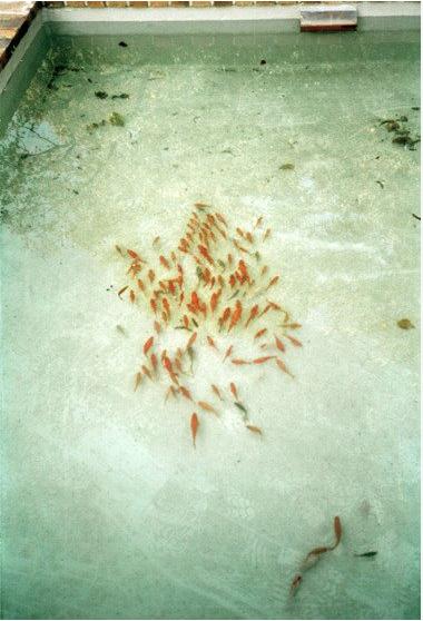 bildschirmfoto-2011-11-13-um-1235411